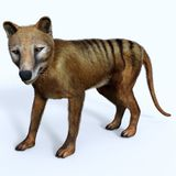 Thylacine Marsupial Side Profile stock photography