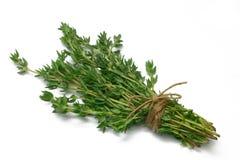 Thym de série d'herbe Photo libre de droits