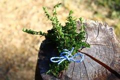 Thym sur un tronc d'arbre superficiel par les agents dans le jardin photographie stock libre de droits