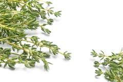 Thym vert frais, thymus vulgaris, dans deux coins d'isolement sur a Photos stock