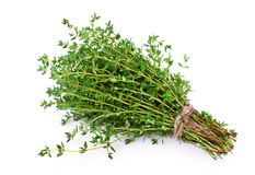 Free Thyme Stock Photos - 14328683