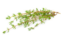 Thyme. Fresh thyme on white isolated background Stock Photos