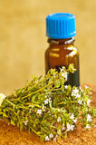 Thyme Stock Images