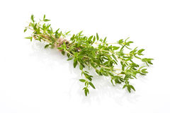 Thyme . Stock Photography