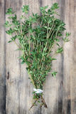 Thyme. Royalty Free Stock Photo