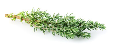 Thyme. Has many useful properties.It is used in medicine and cookery Royalty Free Stock Photos