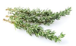 Thyme. Stock Image