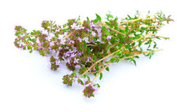 Thyme. On white background. blooming flower Stock Photos