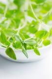 Thyme. Fresh green thyme on white plate Royalty Free Stock Photo