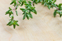 Thyme Royalty Free Stock Photo