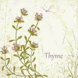 Thyme royalty-vrije illustratie