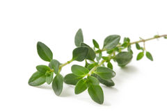 Thyme. Fresh-picked thyme sprig, isolated on white Royalty Free Stock Photo
