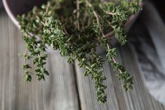 Thyme - aromatic plant of the mint family are used as a culinary herb. And the plant yields a medicinal oil royalty free stock photos