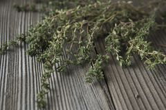 Thyme - aromatic plant of the mint family are used as a culinary herb. And the plant yields a medicinal oil stock image