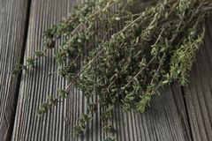 Thyme - aromatic plant of the mint family are used as a culinary herb. And the plant yields a medicinal oil stock photos