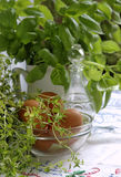 Thyme and basil Royalty Free Stock Images