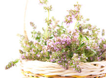 Thyme in a basket on white background Stock Photo