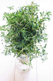 Thyme bouquet royalty free stock photos
