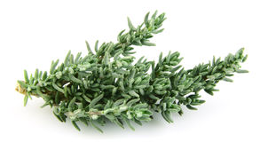 Thyme branch Royalty Free Stock Photo