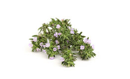 Thyme. Royalty Free Stock Photography