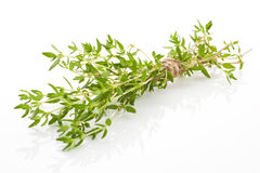 Thyme bunch. Stock Image