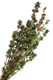Thyme bunch Stock Photo