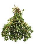 Thyme bunch Royalty Free Stock Photography