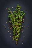 Thyme. Stock Photography
