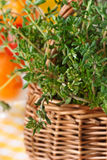 Thyme close-up. Stock Image