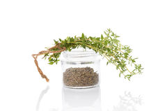 Thyme, culinary aromatic herbs. Stock Image