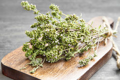 Thyme Culinary Herb Stock Image
