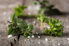 Thyme and curly parsley Stock Photo