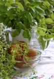 Thyme en basilicum Royalty-vrije Stock Afbeeldingen