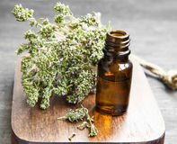 Thyme Essential Oil Bottle Stock Photography