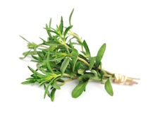 Thyme fresh herb Royalty Free Stock Images