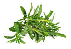Thyme fresh herb Stock Photography