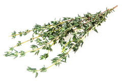 Thyme fresh herb Stock Image