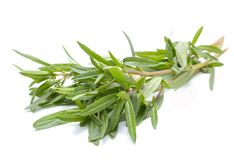 Thyme fresh herb isolated on white background Royalty Free Stock Photography