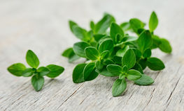 Thyme fresh herb. Stock Photography
