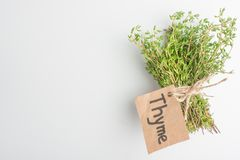 Thyme fresh herbs close-up, on a light background. royalty free stock images