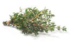 Thyme fresh herbs Thymus vulgaris shrub stock image