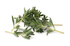 Thyme Royalty Free Stock Image