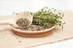 Thyme fresh on white background. Thyme fresh, use in cosmetics and food on white background stock photos