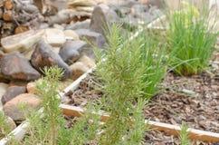 Thyme on garden Stock Photo