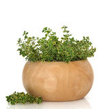 Thyme Herb Royalty Free Stock Photography
