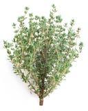 Thyme Herb. Royalty Free Stock Photos