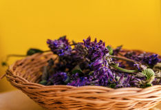 Thyme herb and mortar Stock Photos