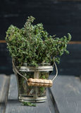 Thyme herb plant in a vase Stock Images