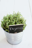 Thyme herb in a planter with chalkboard with its name in Latin Royalty Free Stock Images