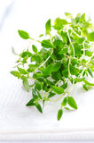 Thyme herb on white tablecloth Stock Image